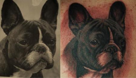 Hundeporträt... Seba Artistocrat...