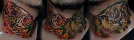 Owl and Owl's skull