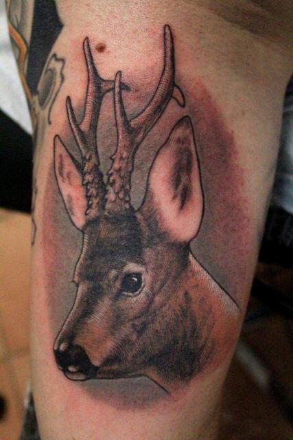Rehbock, noch in Arbeit, Tattoo Hanz-Kingstreet