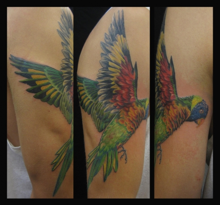 vogel-Tattoo: Rainbow Lorikeet