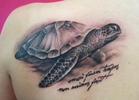 Schildkröte mit Spruch