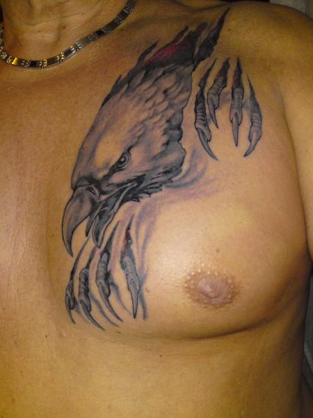 der neugierige Adler