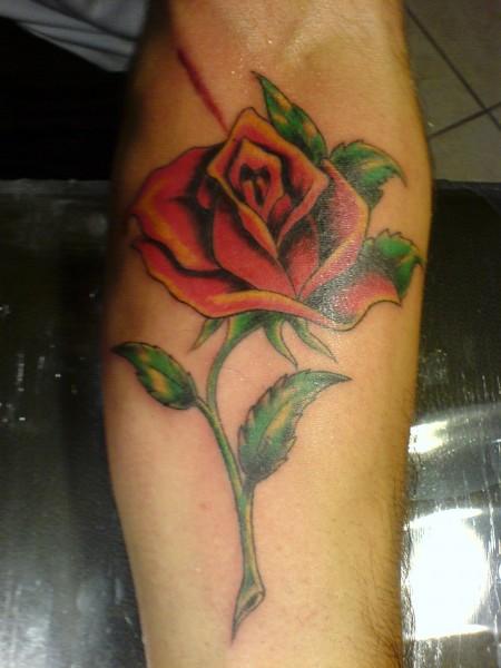 drug-rose
