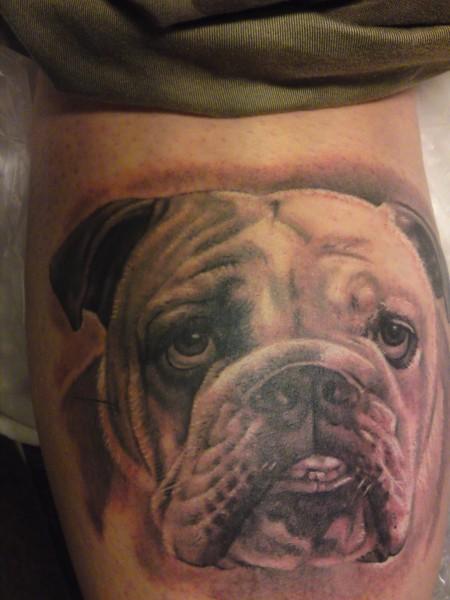 Bulldoggenporträt