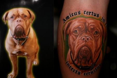 Hunde Portrait, 4 Stunden Arbeit