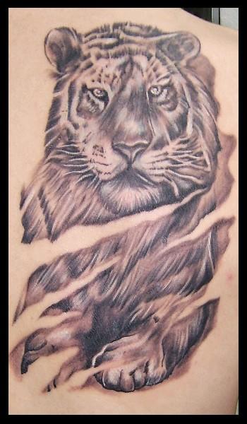 tiger in schwarz/grau