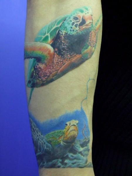 66667 durchschnitt 9 667 21 stimmen tattoo schildkroeten abgeheilt