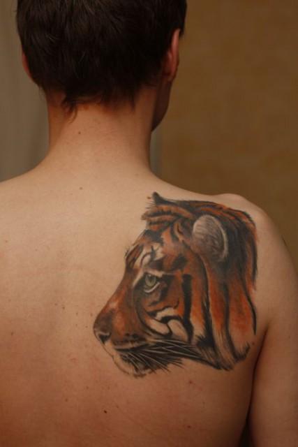 Tiger - Rückenansicht