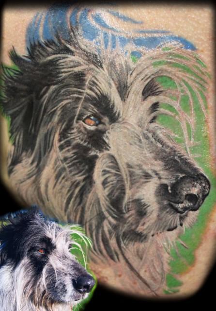 Irischer Wolfshundmix