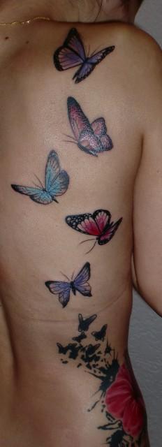 Hibiskus & Schmetterlinge