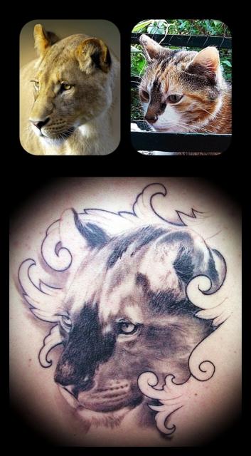 Lioness inside