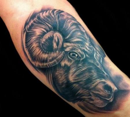 widder-Tattoo: Widder