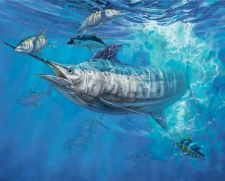 Blue Marlin hunting