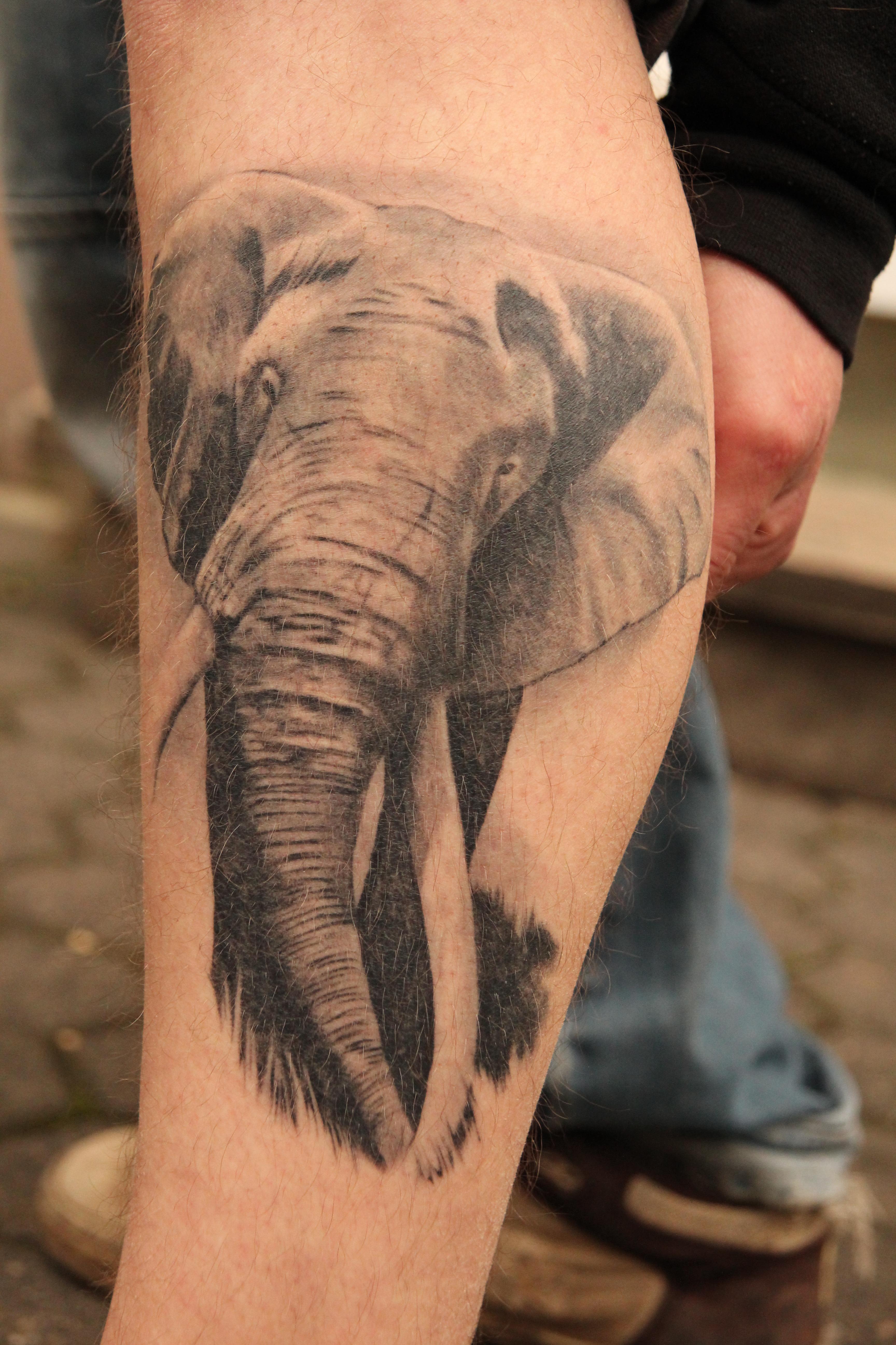 Rolf20 Mein Elefant abgeheilt   Tattoos von Tattoo Bewertung.de