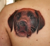 Farbportrait Hund