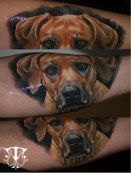Hunde Portrait, Ridgeback Hündin