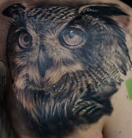 Eule Owl