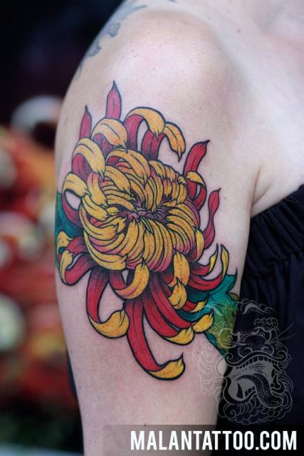 Pfingstrose Blume in Bunt