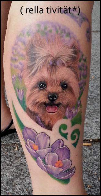 yorkshire terrier, krokus