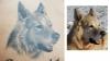 Hunde-Porträt