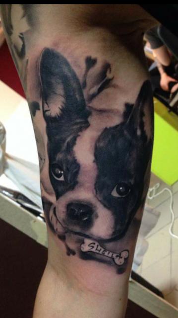 Französische Bulldogge Sheila