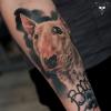 Hundeportrait verheilt (1 Jahr) - Minibully