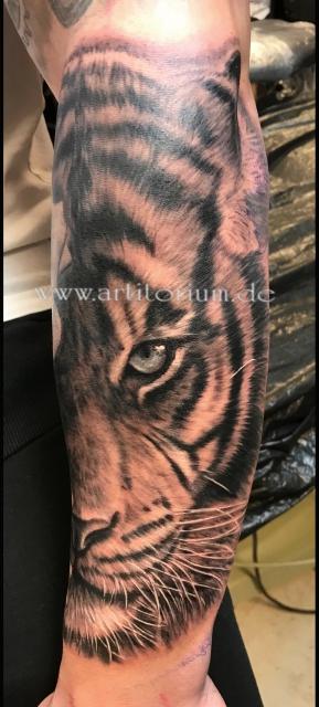 Tigergesicht Porträt