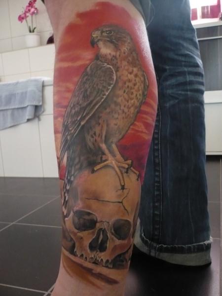 Falke auf Schädel.