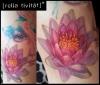 Bein in Arbeit, Lotus