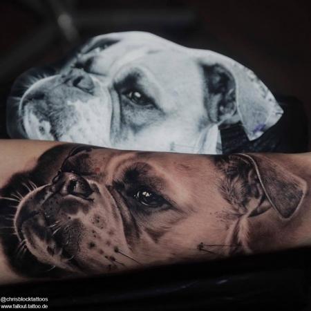 Bella die Bulldogge