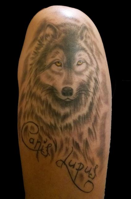 Ein Wolf für den Hundetrainer