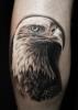 Schwarz-weiß realitisch Adler Tattoo