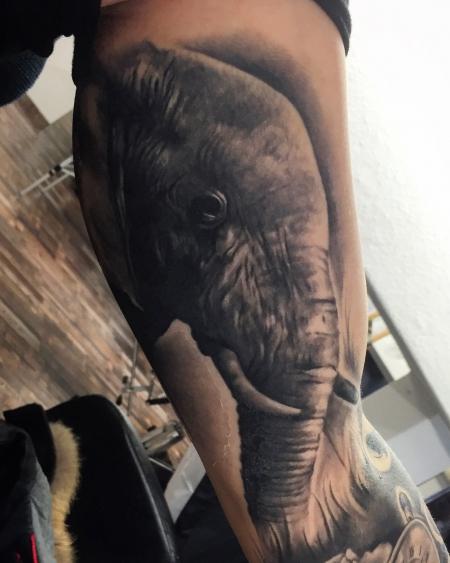 Elefant abgeheilt