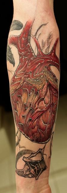 Herz, Herzmuskel (teilweise aus Holz)