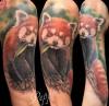 Roter Panda / Kleiner Panda