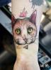 König Katze