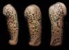 polinesian sleeve marquesa maori