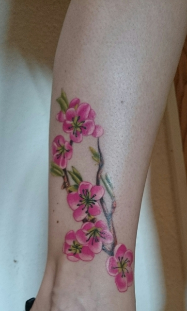 Japanischer Kirschblütenzweig