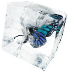 frozen-butterfly's Bild