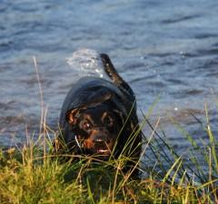 dogwoman's Bild