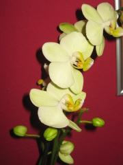 Orchidee24's Bild