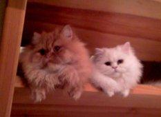 spooky_cats85's Bild
