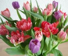 Tulpe55's Bild